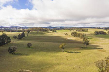Foto de Sheep in a green grassy field in the Australian outback - Imagen libre de derechos