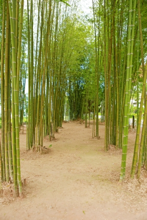 bamboo tree plant in garden mural