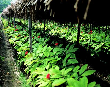 Foto de Plant - Imagen libre de derechos