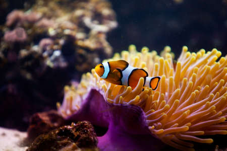 striped fish on coral reef