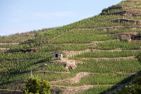 Photo pour View of the M. Chapoutier Crozes-Hermitage vineyards in Tain l'Hermitage, Rhone valley, France - image libre de droit