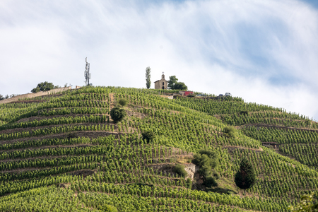 Photo pour View of the M. Chapoutier Crozes-Hermitage vineyards in Tain l'Hermitage, Rhone valley, France - image libre de droit