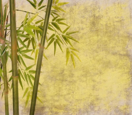 Photo for bamboo on old grunge paper texture background - Royalty Free Image