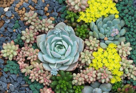 Foto de Miniature succulent plants - Imagen libre de derechos