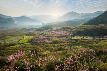 Photo pour Rural landscape,Peach Blossom in moutainous area in shaoguan district, guangdong province, China - image libre de droit