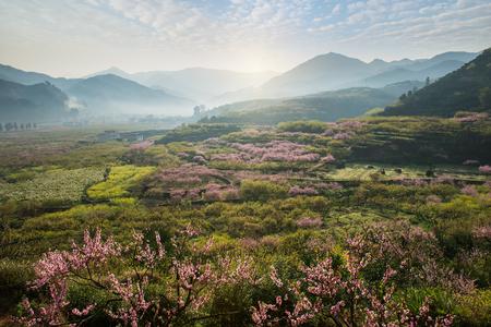 Foto de Rural landscape,Peach Blossom in moutainous area in shaoguan district, guangdong province, China - Imagen libre de derechos