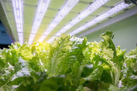 Photo pour Organic hydroponic vegetable garden - image libre de droit