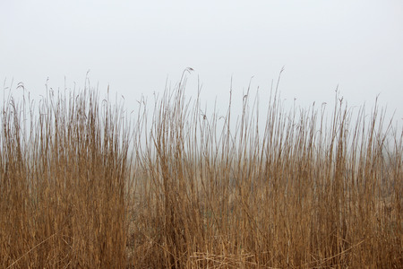 Photo for thickets of grass in the fog in a vacant lot in the spring early in the morning. - Royalty Free Image