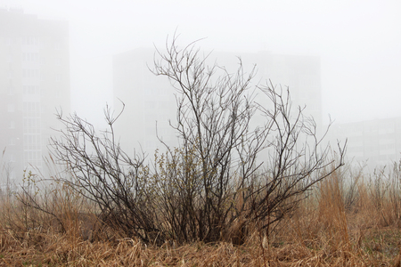 Photo for a lonely little bush and houses in the fog in a vacant lot in the spring early in the morning. - Royalty Free Image