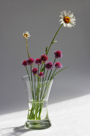 Photo pour A few twigs of wild chives onion Allium schoenoprasum and chamomile in a glass vase on a gray background - image libre de droit