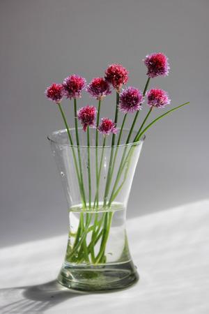 Photo pour A few twigs of wild chives onion Allium schoenoprasum in a glass vase on a gray background - image libre de droit
