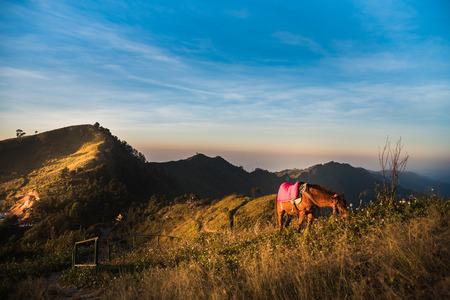 Foto de horses on the mountain - Imagen libre de derechos