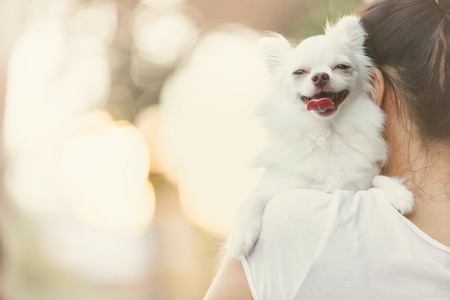 Carry on a white chihuahua.