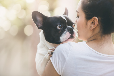 French bulldog is cute kissing girl. She carry on a dog.