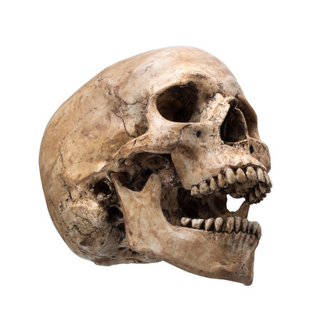 Photo pour sideview of human skull open mouth on isolated white background - image libre de droit