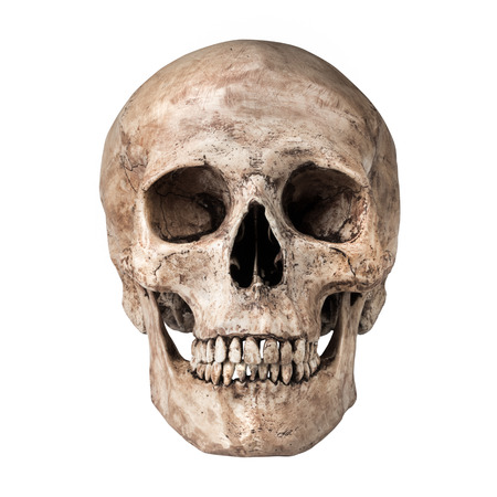 Photo pour Human skull on isolated white background - image libre de droit