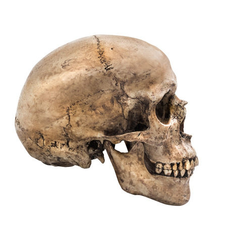 Photo pour Human skull on isolated white background, side view - image libre de droit