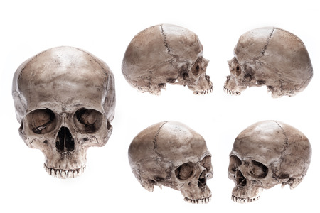 Photo pour Skull model set on isolated white background - image libre de droit