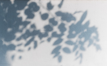Foto de tree shadow on the white wall pattern - Imagen libre de derechos