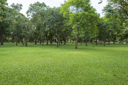 Photo pour Green lawn with trees in park - image libre de droit