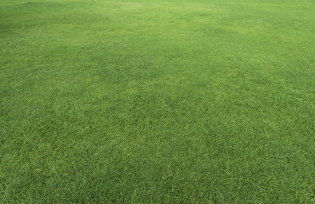 Photo for Green grass texture from a field - Royalty Free Image
