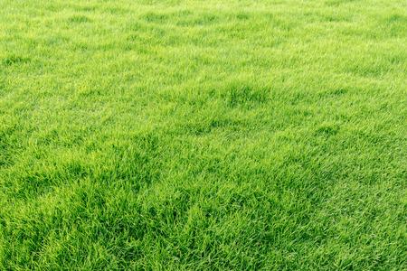 Photo pour Closeup image of fresh spring green grass - image libre de droit