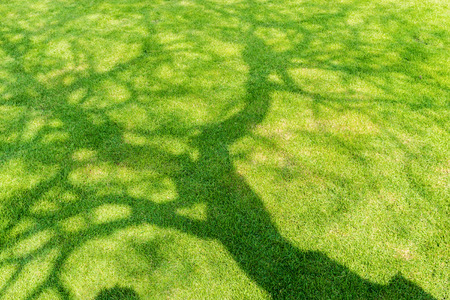Photo for Tree shadow on short green grass in spring - Royalty Free Image