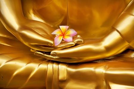 Foto de Frangipani in hand of image buddha - Imagen libre de derechos