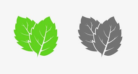 Illustration for Mint. Icon set. Green and gray. Isolated leaves on white background - Royalty Free Image