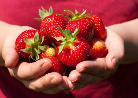Photo for Beautiful, fresh strawberries in the hands of the grower  - Royalty Free Image