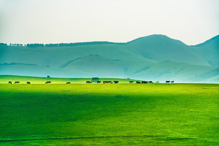 Photo for grassland scenery - Royalty Free Image