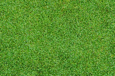 Photo pour Beautiful green grass pattern from golf course - image libre de droit