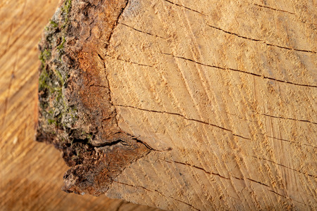 Photo for The texture of hardwood. Cross-section of a beech tree trunk. Light background. - Royalty Free Image