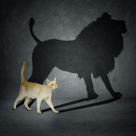 Foto de Cat with lion shadow on the wall - Imagen libre de derechos