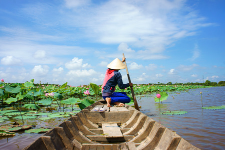 Photo for Beautiful landscaping of Vietnamese village, woman rowing the row boat to pick lotus flower on waterlilly pond at Mekong Delta - Royalty Free Image