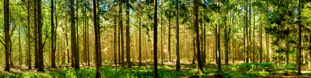 Photo for Forest panorama - Royalty Free Image