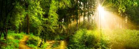 Photo for Forest path beside a stream, idyllic sunrise in forest - Royalty Free Image