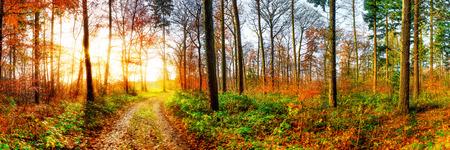 Photo pour Road through a beautiful autumn forest at sunrise - image libre de droit