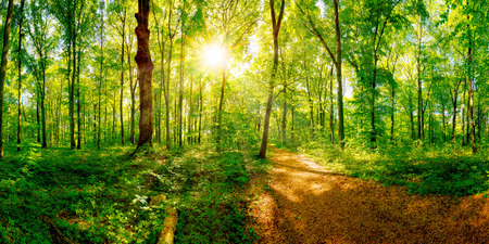 Foto de Path through a spring forest in bright sunshine - Imagen libre de derechos