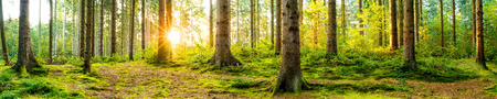 Photo for Panorama of a beautiful forest at sunrise - Royalty Free Image