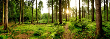 Foto de Sunrise in a beautiful forest in Germany - Imagen libre de derechos