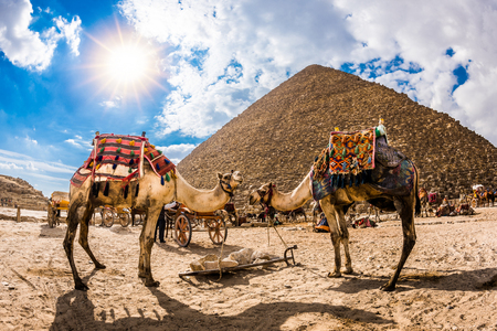 Photo for Two camels in front of the great pyramid of Giza, Egypt - Royalty Free Image
