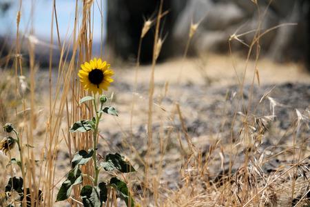 Photo for Desert Flower - Royalty Free Image