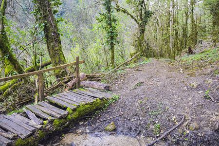 Photo for old wooden bridge in  the overgrown jungle thicket of moss - Royalty Free Image