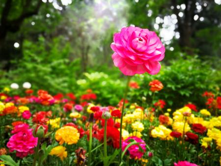 Photo pour colorful flowers - image libre de droit