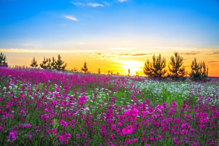 Photo pour Sunrise and flowers scenery - image libre de droit