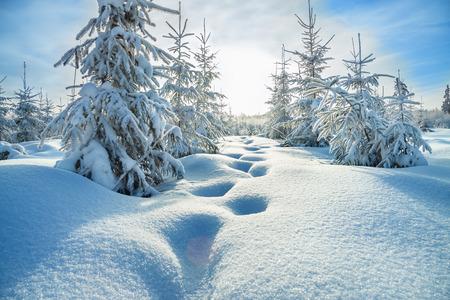 Photo pour beautiful winter landscape with the forest  and blue sky - image libre de droit