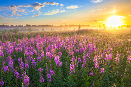 Foto de beautiful rural landscape with the sunrise  and  blossoming meadow - Imagen libre de derechos