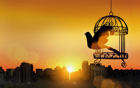 Photo for silhouette bird go out of cage in freedom concept in sunset - Royalty Free Image