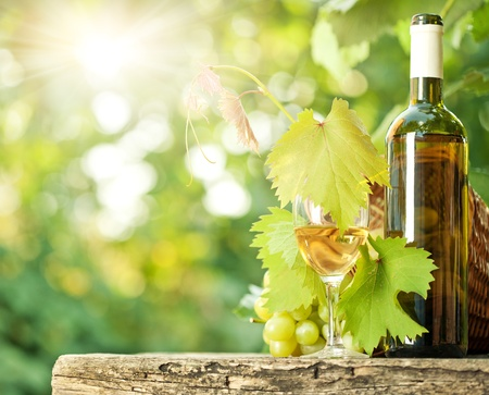 Photo pour White wine bottle, glass, young vine and bunch of grapes against green spring background - image libre de droit